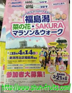 さくらマラソン.jpg